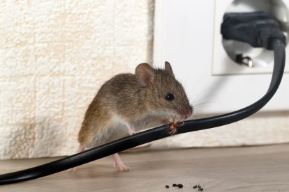 Pest Control in Banstead, Woodmansterne, SM7. Call Now! 020 8166 9746